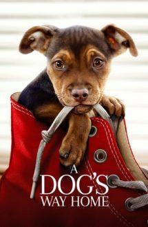 A Dog's Way Home – Drumul unui câine către casă (2019)
