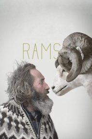 Rams – Despre oameni și oi (2015)