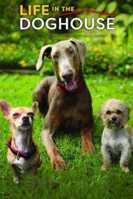 Life in the Doghouse – Viața la adăpostul de câini (2018)