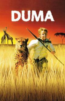 Duma – Prietenul meu, ghepardul (2005)