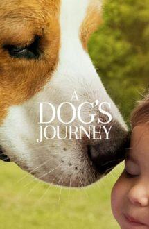 A Dog's Journey – Câinele, adevăratul meu prieten 2 (2019)