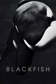 Blackfish – Balena ucigașă (2013)