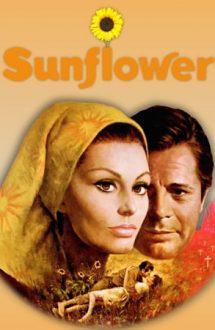 Sunflower – Floarea-soarelui (1970)