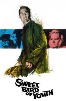 Sweet Bird of Youth – Dulcea pasăre a tinereții (1962)