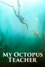 My Octopus Teacher – Înțelepciunea caracatiței (2020)