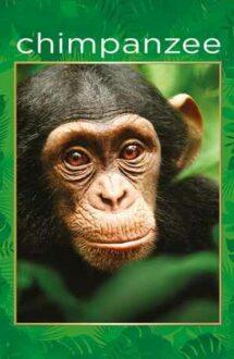 Chimpanzee – Cimpanzeul (2012)