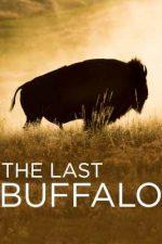 The Last Buffalo (2017)