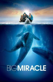 Big Miracle – Misiune de salvare (2012)